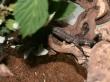 insektarium_09
