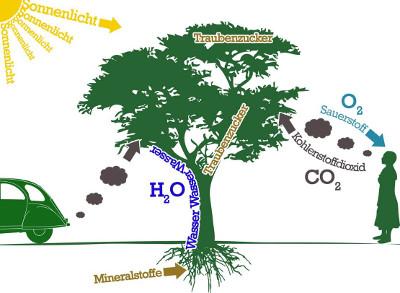 Co2 Umwandeln In Sauerstoff